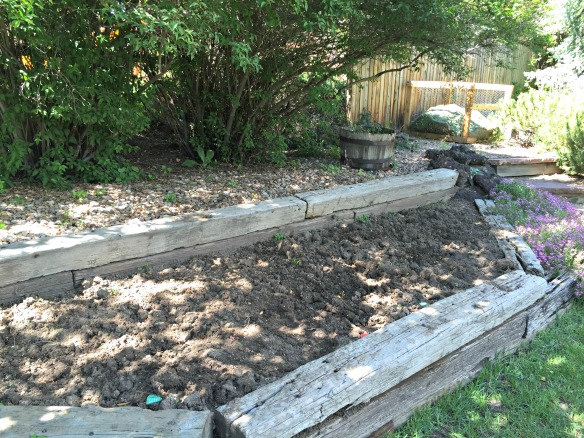 The second section of the garden: Lettuce, Bell Peppers, Cucumbers, and Peas.
