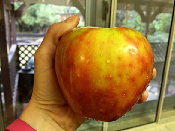 Look at the size of this apple! Honeycrisps are amazing.